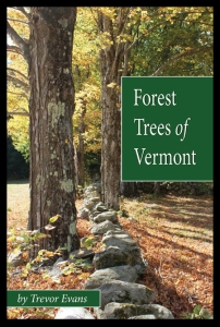 forest_trees_of_VT__85072.1431635304.1280.1280